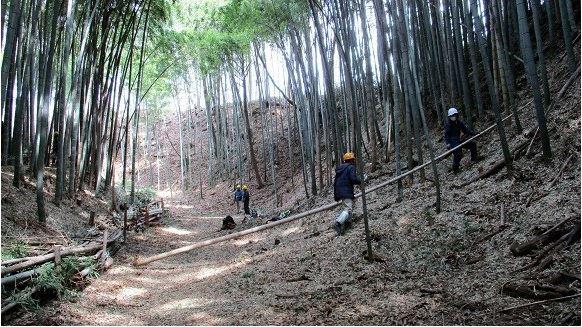 滝山城、斜面、竹、間伐