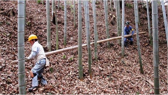 滝山城、竹、斜面、間伐