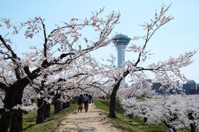 五稜郭、タワー、桜