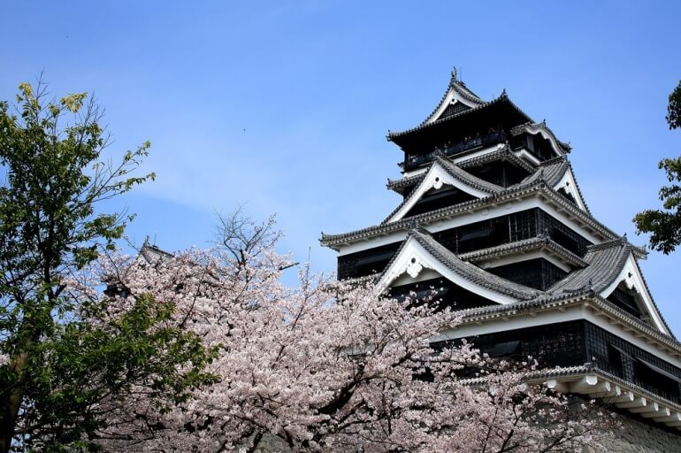 熊本城、大天守、桜