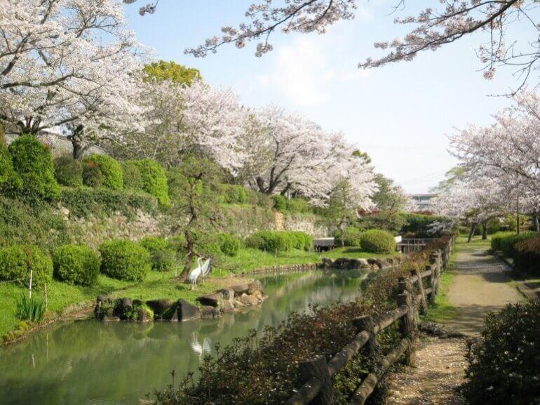 鹿島城、旭ヶ岡公園、桜、堀、水鳥