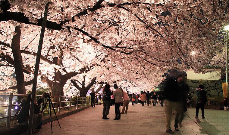 福岡城、ライトアップ、さくらまつり、桜