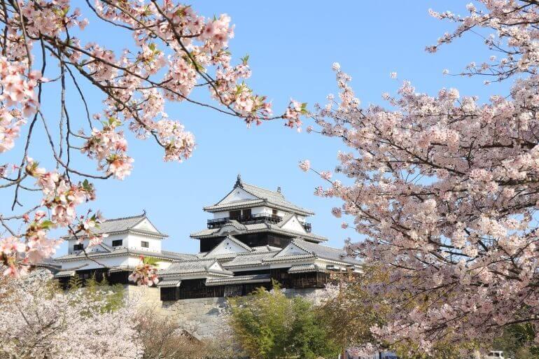 松山城天守群、桜