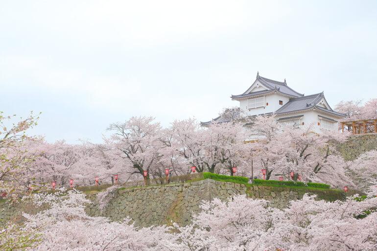 津山城、備中櫓、桜、石垣
