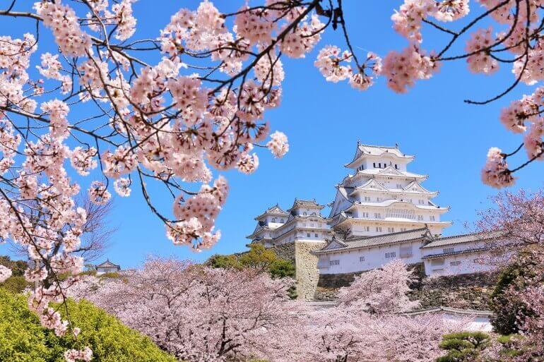 姫路城、天守、桜、純白
