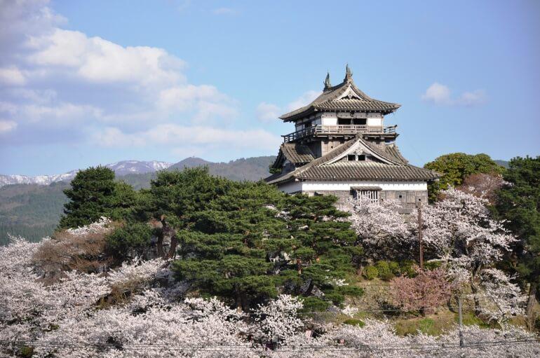 丸岡城、天守、桜、丘陵