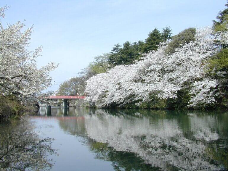 高岡城、駐春橋、桜