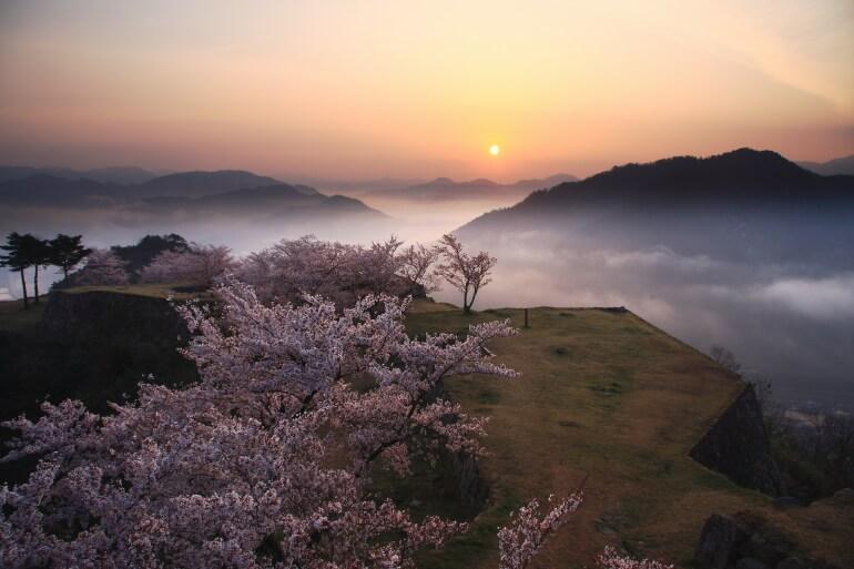竹田城、雲海、桜、レアショット