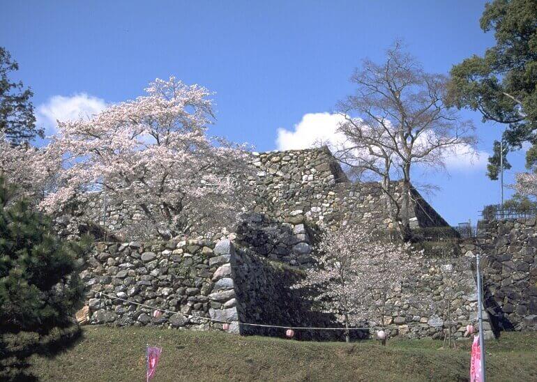 田丸城、石垣、桜
