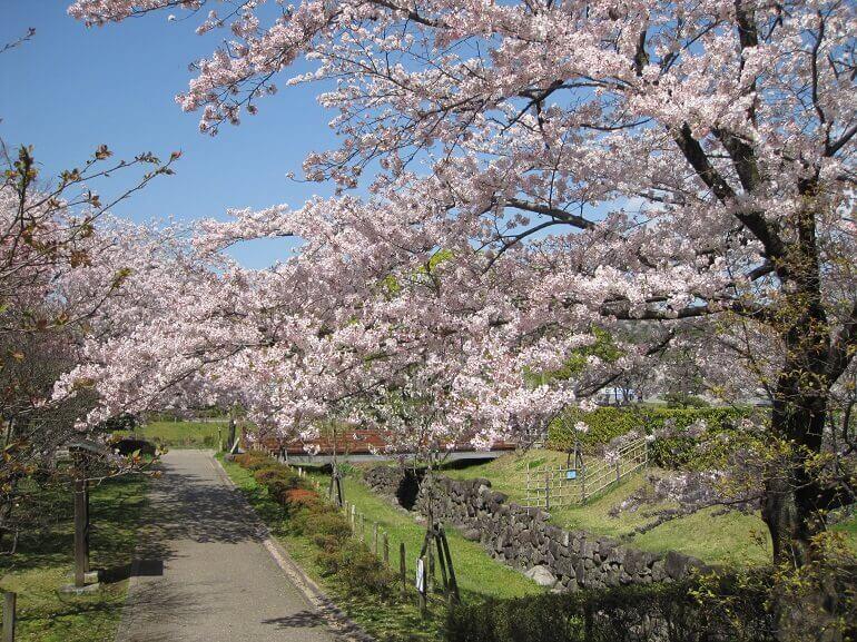駿府城、桜、公園