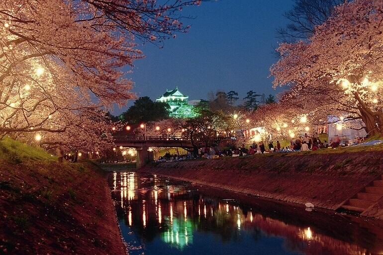 岡崎城、ライトアップ、桜、さくらまつり
