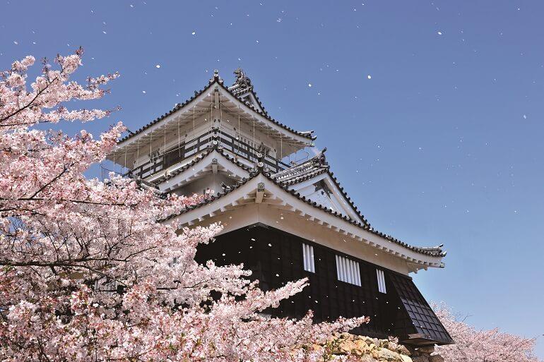 浜松城、桜吹雪、天守