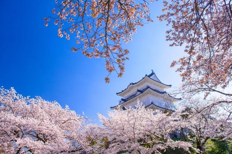 小田原城、再建天守、桜
