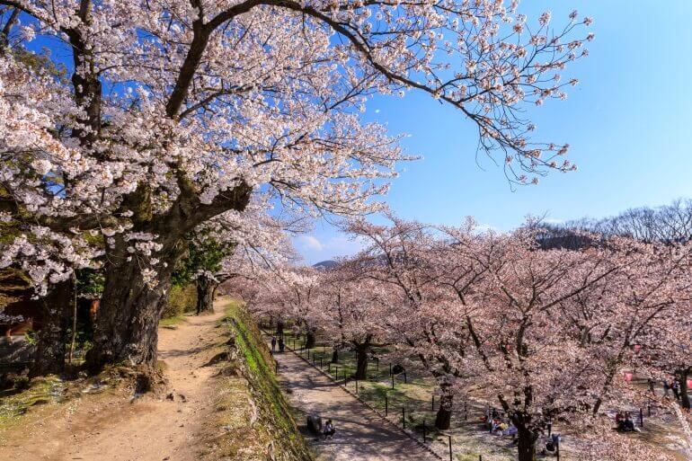 小諸城、桜並木、懐古園