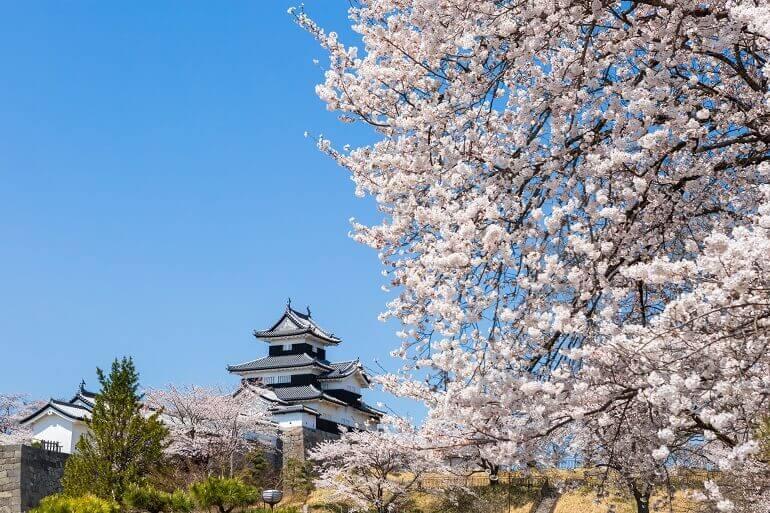白河小峰城、桜、御三階櫓