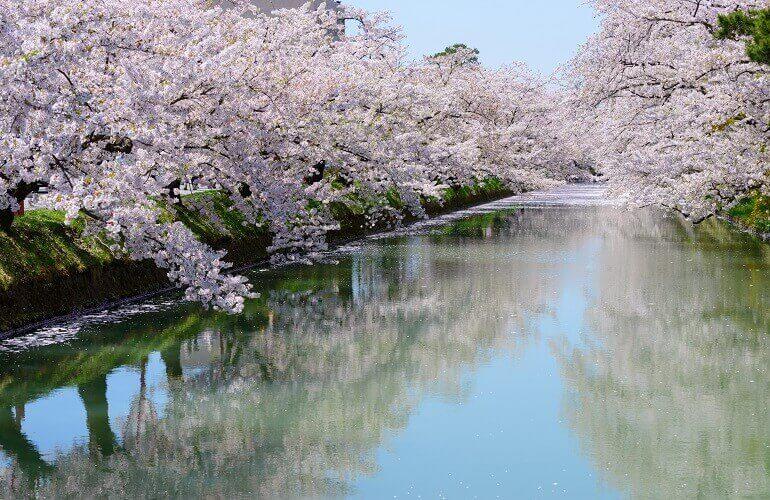 弘前城、水堀、桜