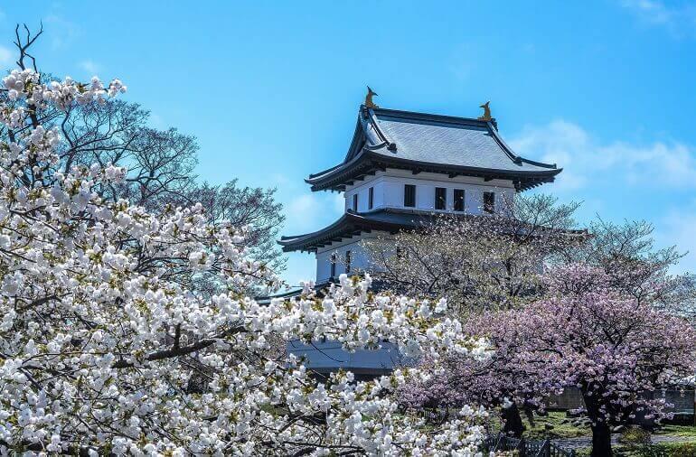 松前城、本丸、桜