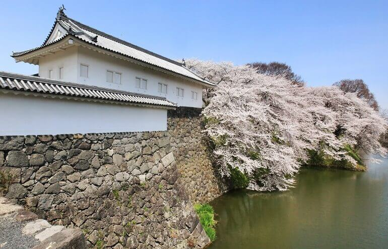 山形城、桜、水堀、花筏