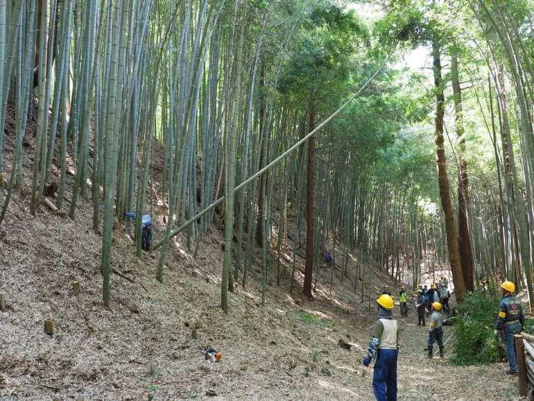 滝山城、竹