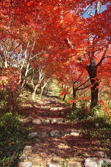 鳥羽山公園、景勝地、紅葉