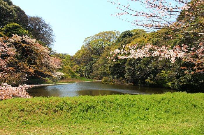 江戸城、皇居、桜、道灌濠