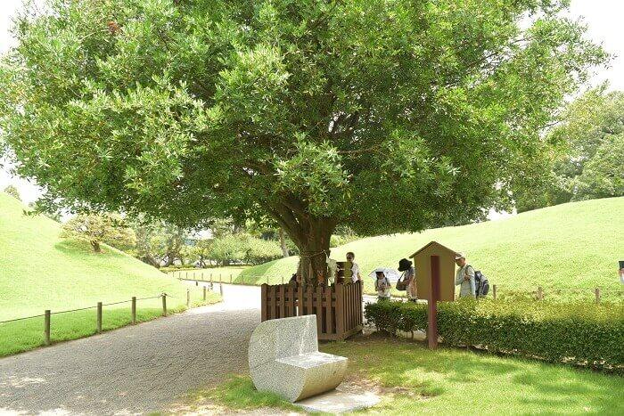 水前寺成趣園、熊本城、梛、神木