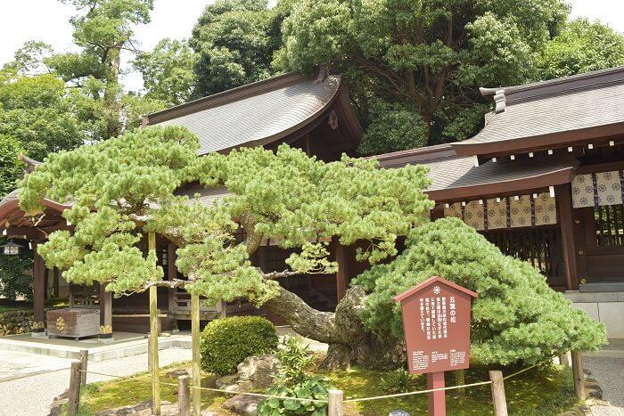 出水神社、境内、盆栽、