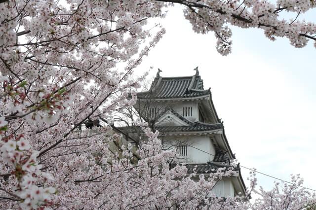 丸亀城、桜、お花見
