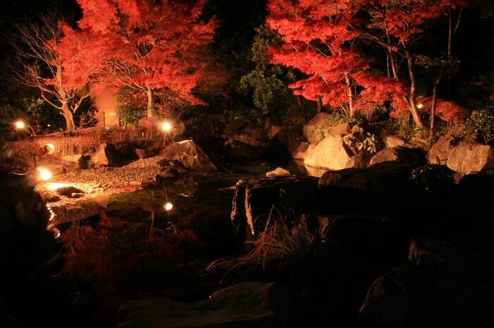伊予松山城、紅葉、ライトアップ