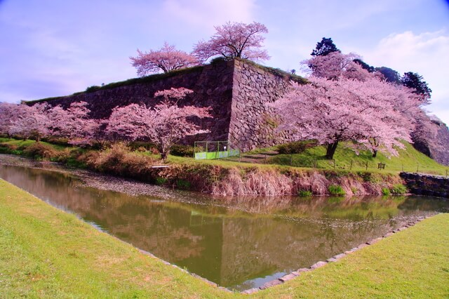 篠山城、高石垣、桜、本丸