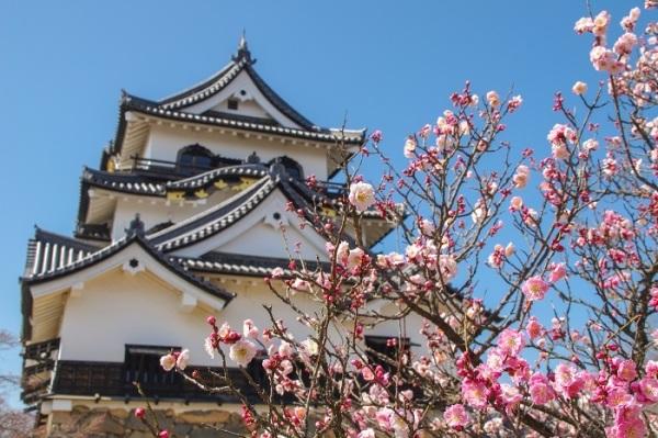 春の花とお城