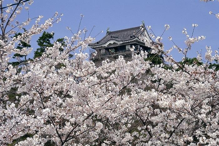岡崎城、岡崎の桜まつり