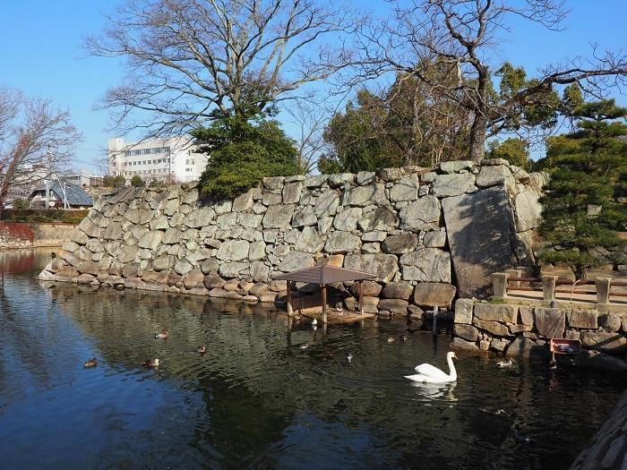 岡山城、水鳥