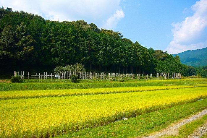 長篠合戦で最大の激戦地であった設楽原