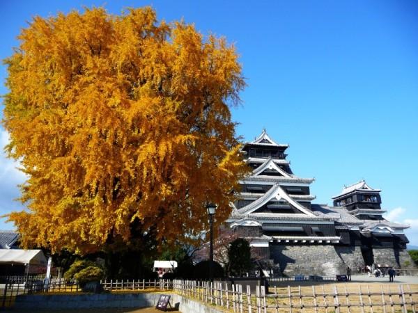 第107回【鑑賞】熊本城にはたくさん食べものが隠れているって本当?