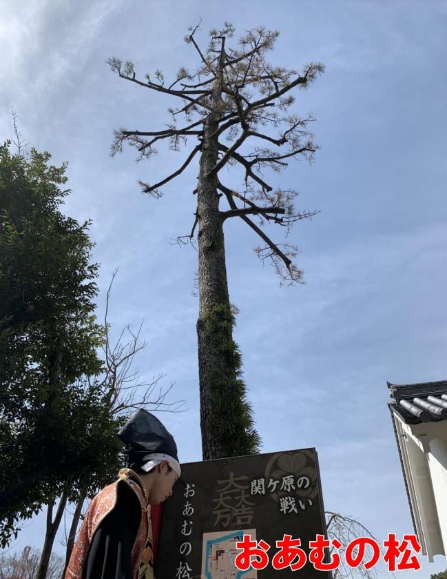 前田慶次、大垣城、おあむの松