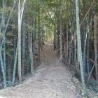 二の郭虎口の土橋