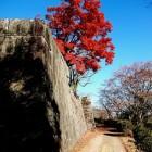 石垣が素晴らしいです。
