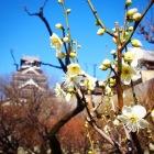 早春には梅の花