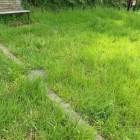 遺構。これ以上緑が生い茂ると埋もれる。