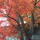 紅葉狩りに来たんだった。