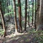 天然の竪堀の沢