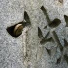 城碑が気に行ったカタツムリ
