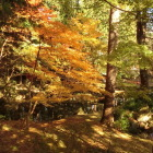 北畠氏館跡の庭園