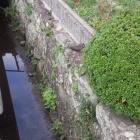 登城道脇に残る石組。