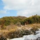 芥川山城遠景
