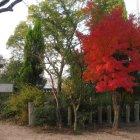 かんかん井戸と紅葉