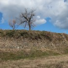 陣屋跡を取り巻く石垣