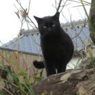 かわいい鳴き声だった黒猫