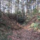 ライト側谷底藪の先にあった深堀(折れ付き)